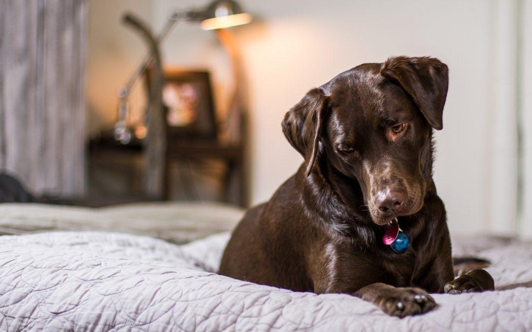 Erfolgreich Hunde beherbergen – so machen es Hoteliers richtig!